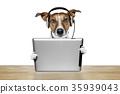dog computer 35939043