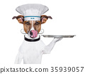 dog cook chef 35939057