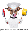 animal, chef, dog 35939059