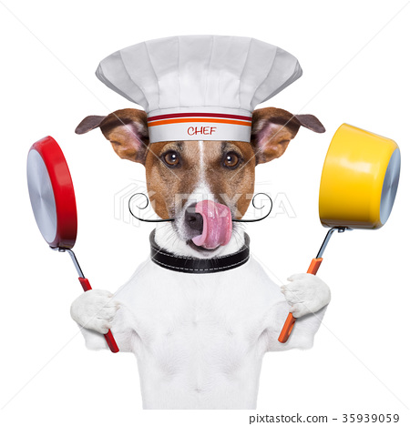 dog cook chef 35939059