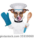 dog cook chef 35939060