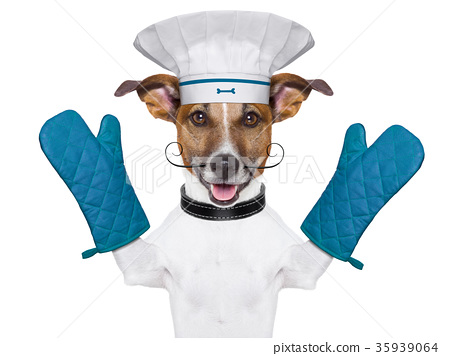 dog cook chef 35939064