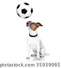 soccer dog 35939065