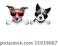animal dog sunglasses 35939067
