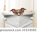 dog toilet 35939085