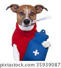 sick dog 35939087