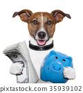 money dog 35939102