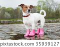 dog in the rain 35939127