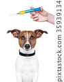 dog vaccination 35939134