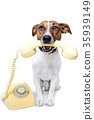 dog phone call 35939149