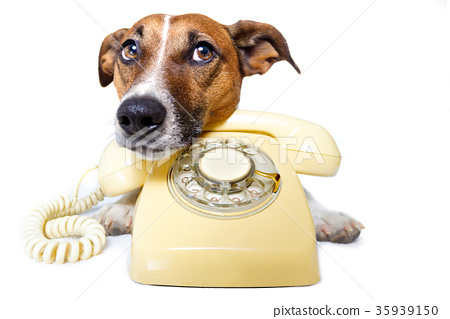 dog phone call 35939150