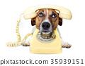 dog phone call 35939151