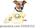 call, dog, phone 35939152