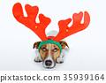 dog as deer 35939164