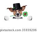 lucky dog 35939206