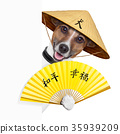 asian dogs 35939209