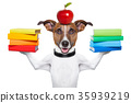 school dog 35939219