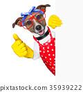 housewife dog 35939222
