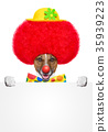clown dog with red wig and hat 35939223