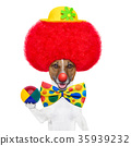 clown dog with red wig and hat 35939232