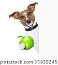 healthy dog 35939245