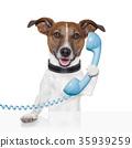 animal, call, dog 35939259