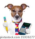 secretary dog 35939277
