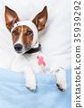 Sick dog with bandages lying on bed 35939292