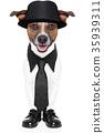 dog in tuxedo 35939311