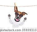 dumb crazy dog 35939313