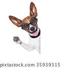 dumb crazy dog 35939315