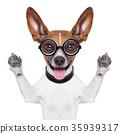 dumb crazy dog 35939317