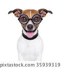 dumb crazy dog 35939319