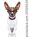 dumb crazy dog 35939320