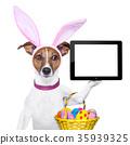 funny easter dog 35939325
