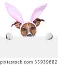 兔子 兔 戲服 35939682