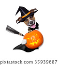 halloween witch dog 35939687