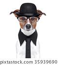 british dog 35939690