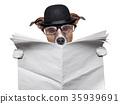 British dog reading 35939691