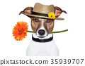 flower dog with hat 35939707