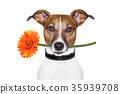 flower dog 35939708