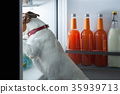 midnight hungry dog 35939713