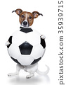dog with a white soccer ball 35939715