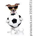 german soccer dog 35939721