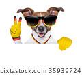 german soccer dog 35939724