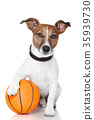 Basket ball  winner dog 35939730