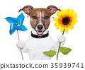 eco energy dog 35939741