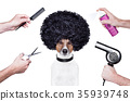 hairdresser  scissors comb dog spray 35939748
