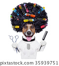 hairdresser   dog with curlers 35939751