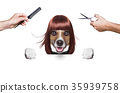 hairdresser dog 35939758